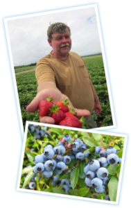 Millen Farms - Family-owned Sustainable Berry Farm - Canada Gap Certified -