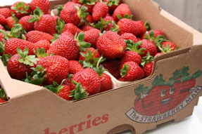 Millen Farms Strawberries